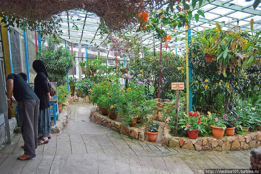 Сад бабочек Танах-Рата, Малайзия