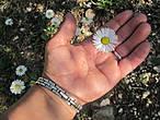 Солнышко на ладони ( цветок не был сорван).