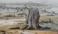 Вдоль русла реки тянется бесконечное кладбище деревьев. В воде концентрация железа превышает нормы в 500 раз и река, когда-то несущая жизнь, сейчас убивает все живое.
