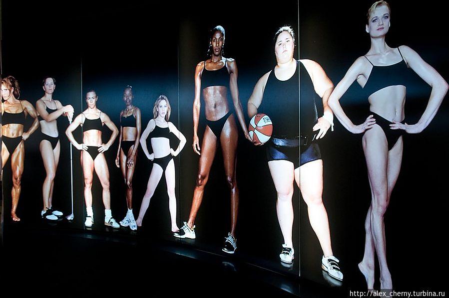 Сравните физические параметры гимнасток, баскетболисток, и можно себя...