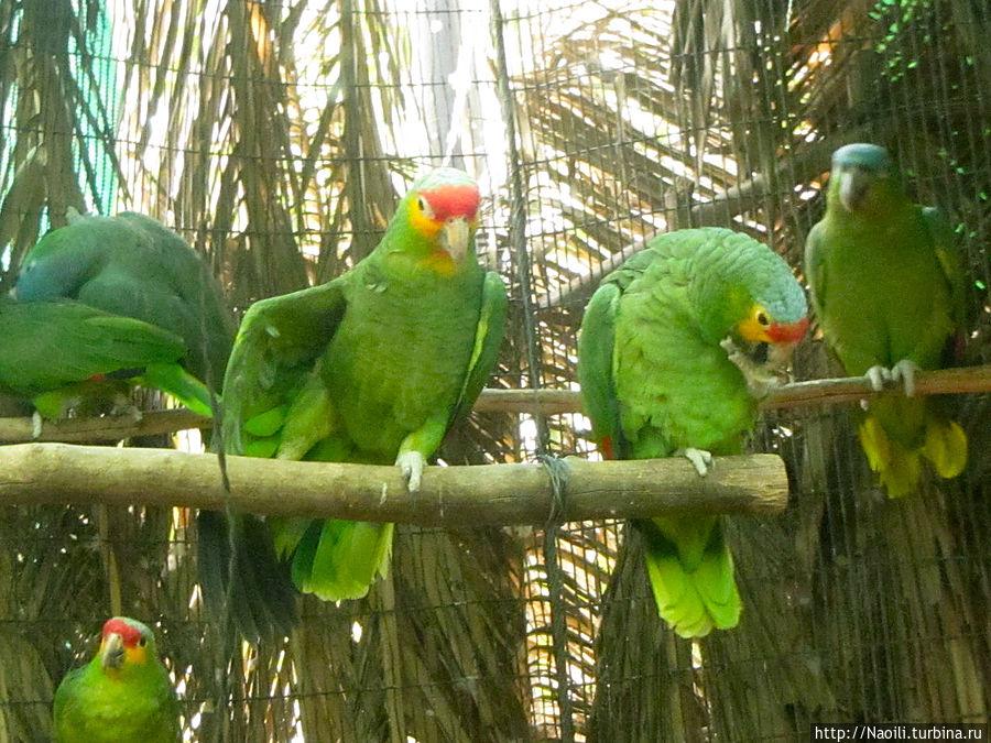 Другая парочка попугаев