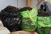 Сушеный папоротник. На Сахалине растет  два вида съедобного папоротника.