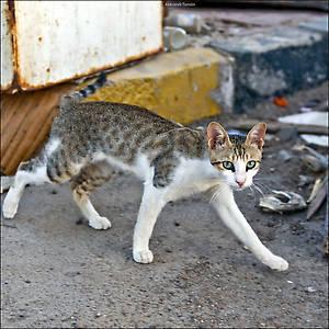 Вот одна из кошек — на рыбном рынке в Хургаде. Там всегда есть, чем поживиться. На самом рынке стояла удивительная вонь... *