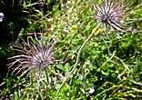 Запахи и формы некоторых растений не переставали удивлять.
