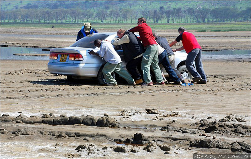 Очень трудно тянуть из болота...нет, не бегемота, а непонятно зачем подъехавшую близко к топкому берегу машину