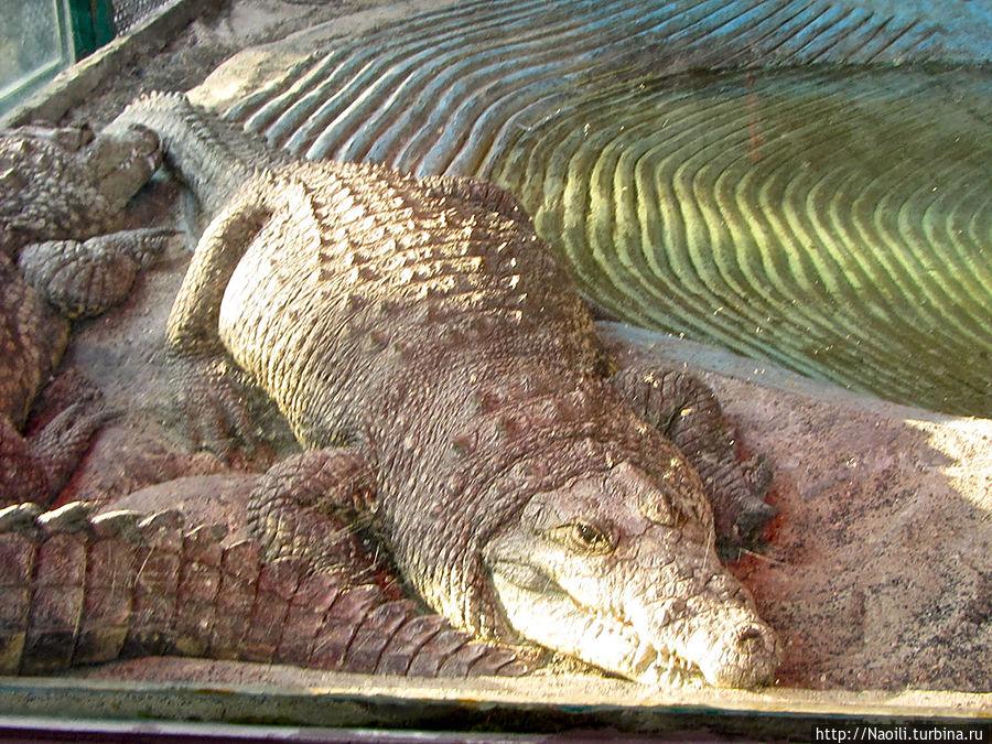 Есть и небольшие крокодилы