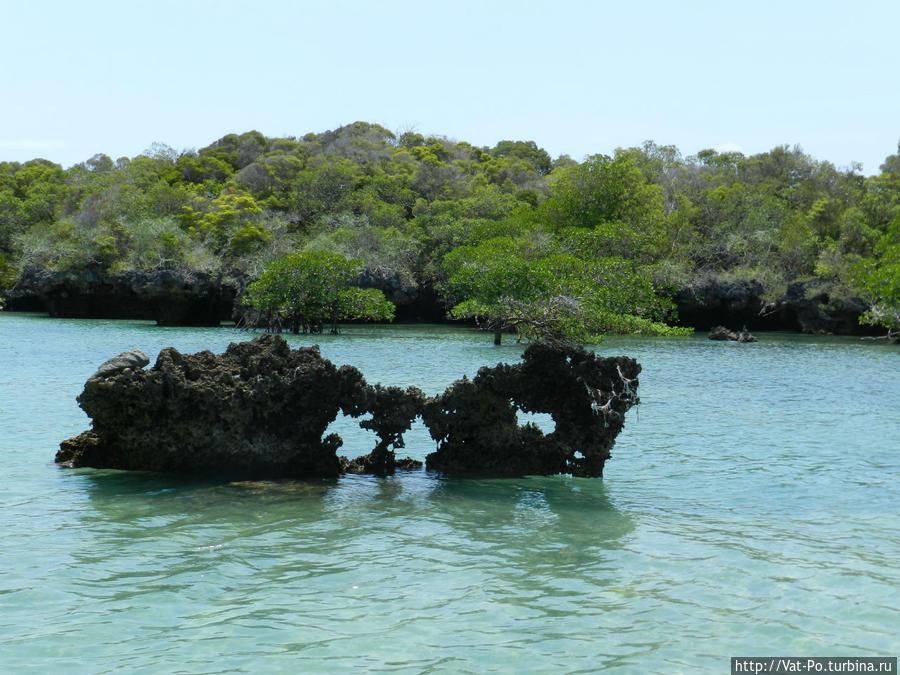 Индийский океан. Мангровые леса на островах.