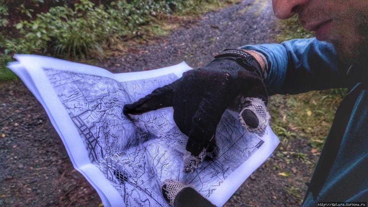 Поход. Психоделика и древние тайны  Новозеландских лесов