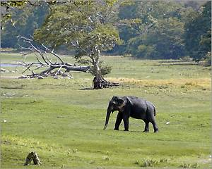 А этого гуляющего слоника мы увидели не в парке, а на окраине одного  из городков и совершенно бесплатно. Как писал Иван Бунин: