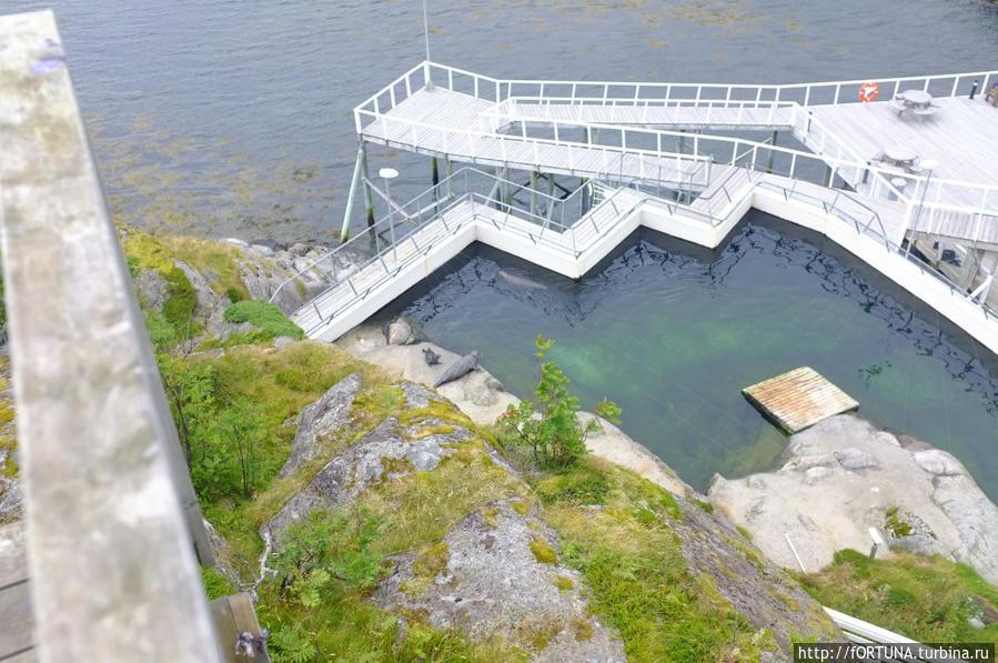Океанариум Острова Лофотен, Норвегия