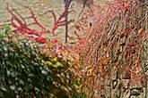 В некоторых местах города растительность, демонстрируя картины в жанре импрессионизма, захватывает все внимание стороннего наблюдателя