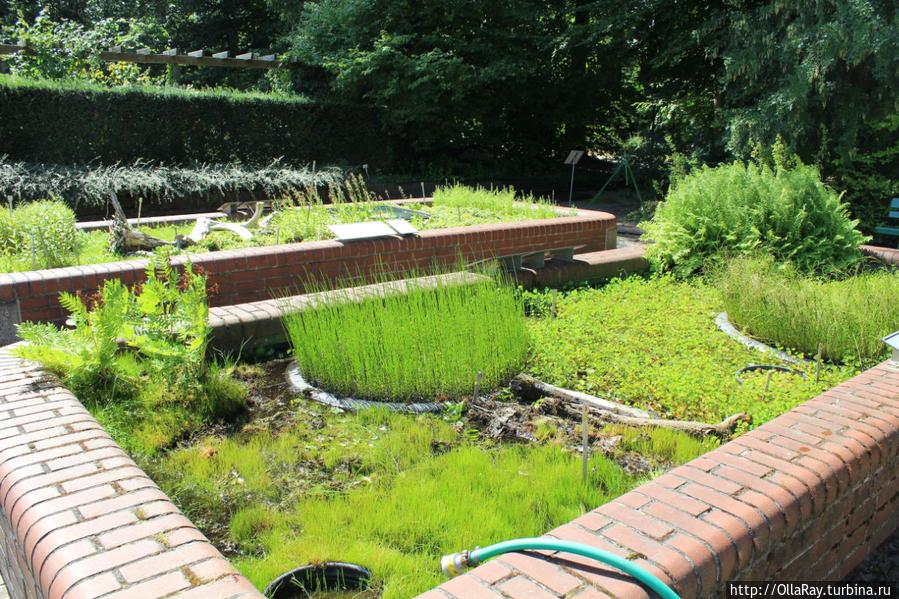 Экспозиция водных растений