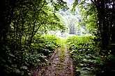 Еще несколько километров по дороге и сквозь деревья показались домишки кордона.