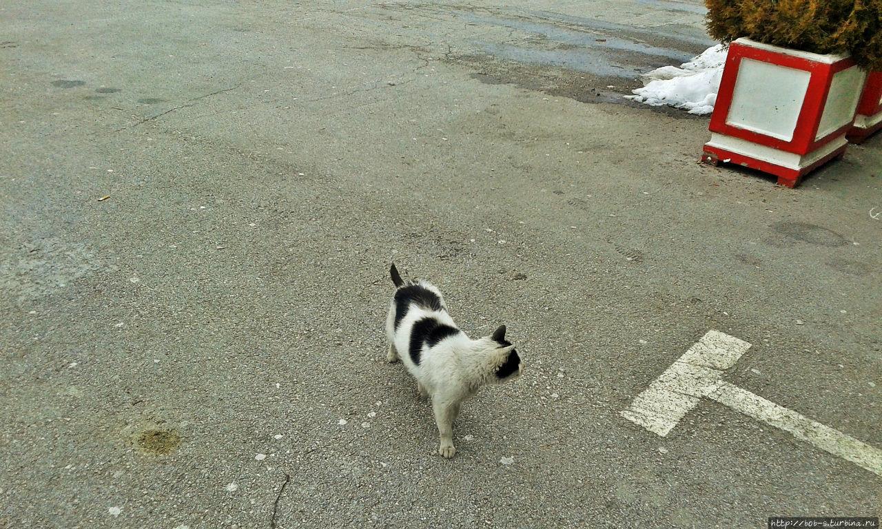 Много котов с чёрно-белым
