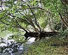 На берегу одного из озер