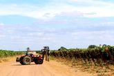 Механизированная обработка виноградников