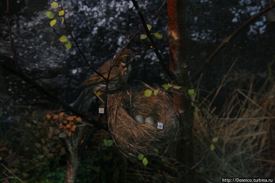 В музее классная экспозиция чучел некоторых птиц и зверей которых можно теоретически встретить