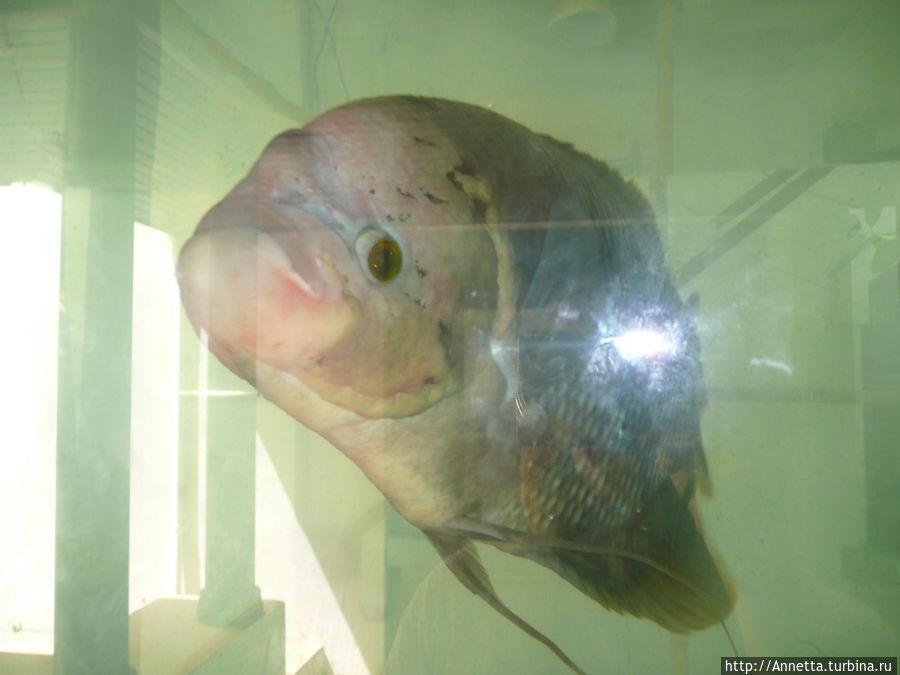 Наш секьюрити )))  на входе слева стоит большой аквариум, где и плавает этот парень