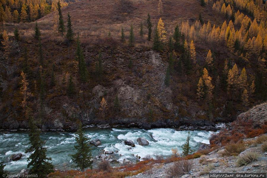 Река Чуя. Осеннее мелководье.