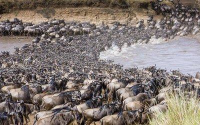Переход реки Мара во время миграции. Из интернета