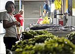 Ежегодно на Филиппинах получают урожай в 15 тонн морских водорослей, которые выращивают в специальных запрудах