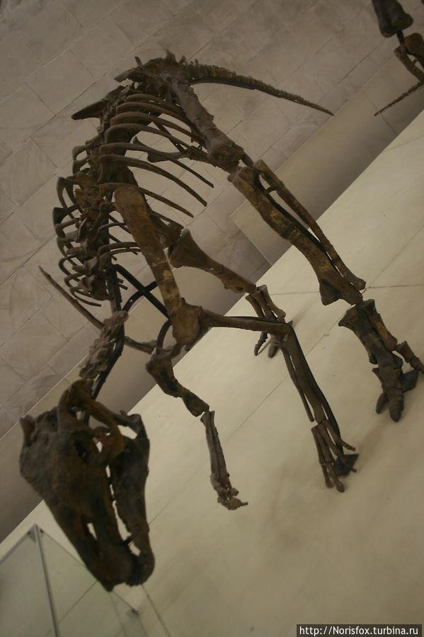 Растительноядный Игуанодонтид Пробактозавр. Ранний мел.Северный Китай.