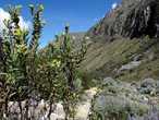Краски перуанского лета