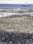 полярник николай прижился среди пингвинов как родной курил сардины в мягкой пачке пил в подворотнях рыбий жир