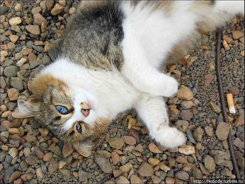 Удивительно голубоглазая кошка владельца картинга.
