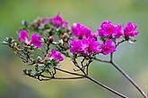 Этому растению я так и не нашёл названия, если кто-то может подсказать — прошу.