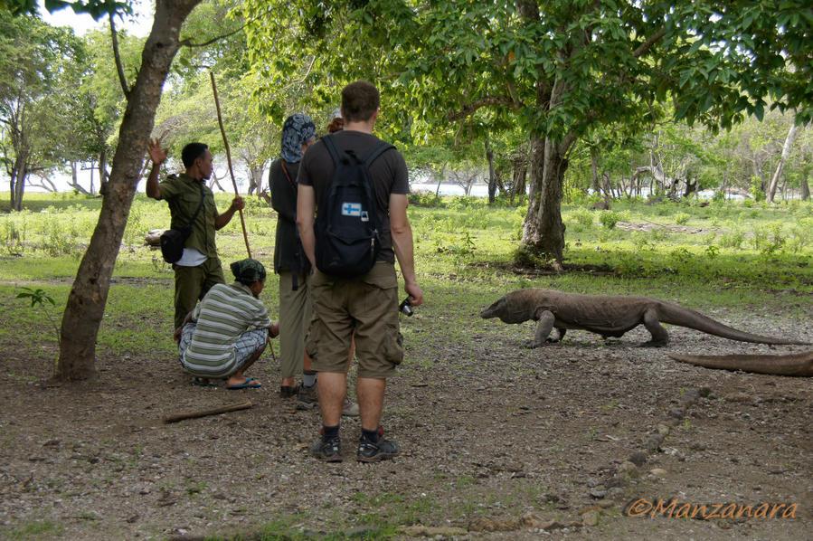 Индонезия. Остров Комодо