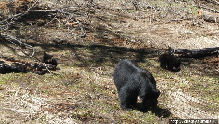 Фотографии медведей из ра