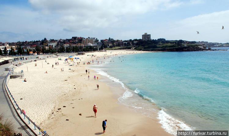 Пляж Куджи в Сиднее