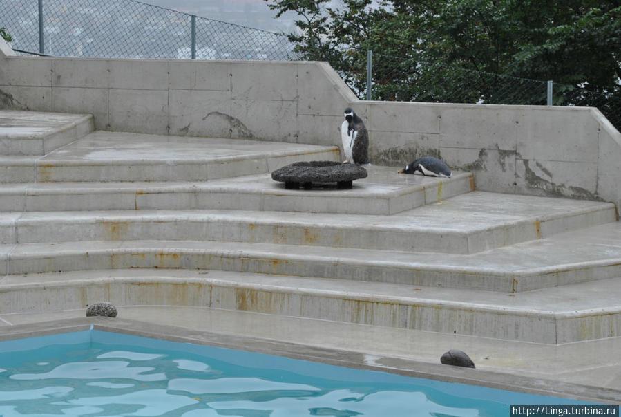 У одного пингвина день явно не задался...