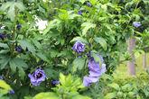 В вазонах и кашпо летом вы обнаружите немало ярких цветущих растений, которые, тем не менее, не выбиваются из общей гаммы.