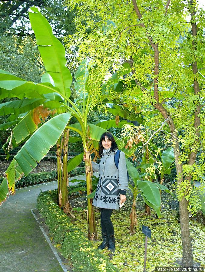 А это если не ошибаюсь банановое дерево, так часто встречающаяся на улицах Мехико, только бананов на тех деревьях я никогда не видела.