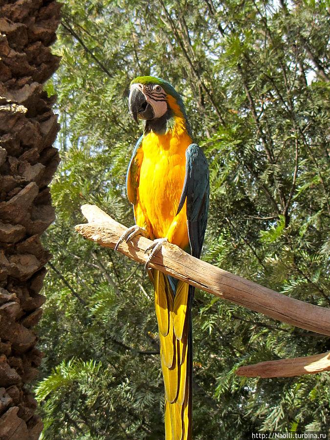 Попугаи летают по всему пространству зоопарка без клеток