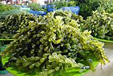 Эти водоросли с вытянутыми