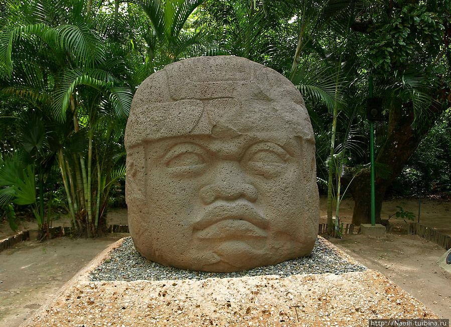 Гиганская голова воина в расссвете сил. Очень часто головы выше моего роста, но эта оказалась особенно крупной (40 -50 тонн). Все головы сделаны из вулканического базальта, который добывали а нагорье Тухтла в штате Веракрус.