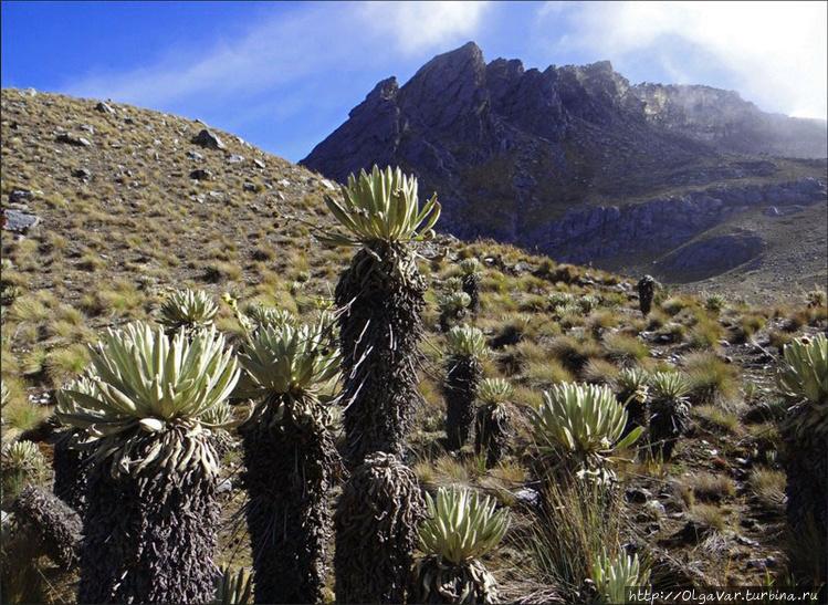 В природном парке Эль Кок