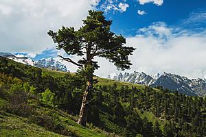 Последнее деревце на нашем пути.. Дальше только холмы, холмы, холмы...