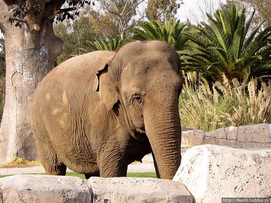 Наверное слону мало места в вольере, хочет выйти