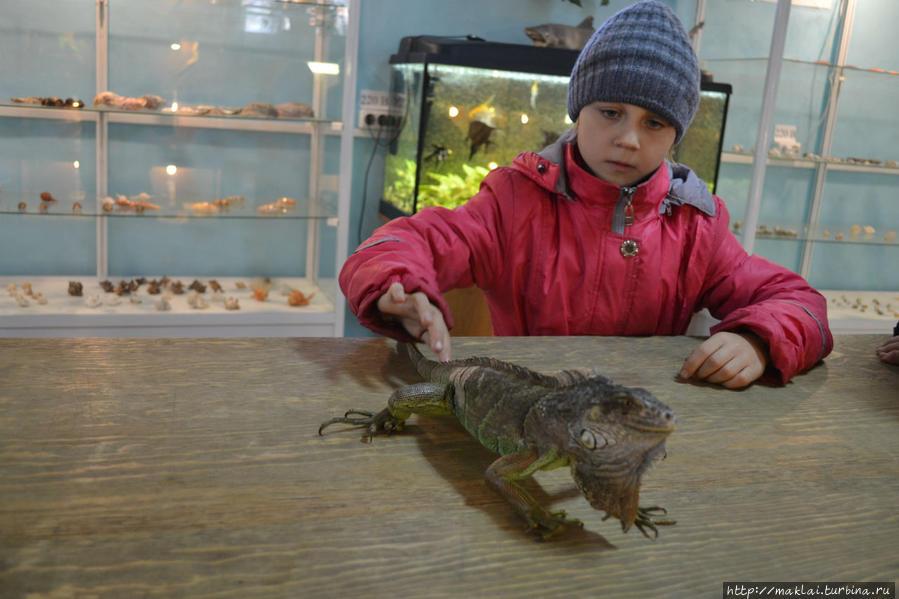 Попытка укротить дракона. Абакан, Россия