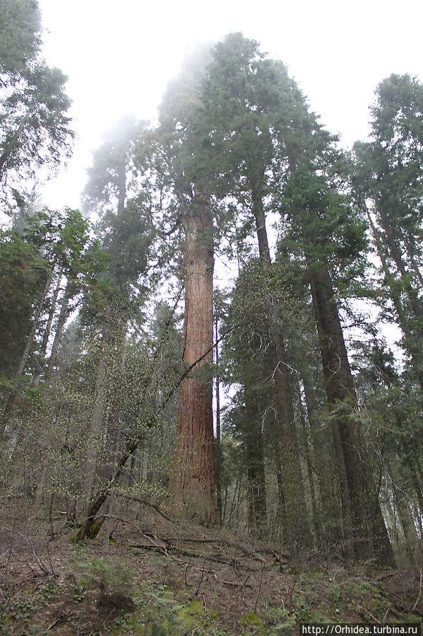 Национальные парки США. Секвойя — чудо-елки Национальный парк Секвойя, Соединенные Штаты Америки