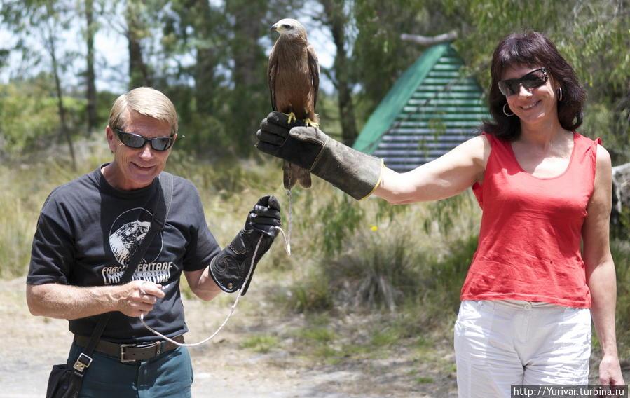 Каждый может увековечить себя с хищной птицей на руке Маргарет-Ривер, Австралия