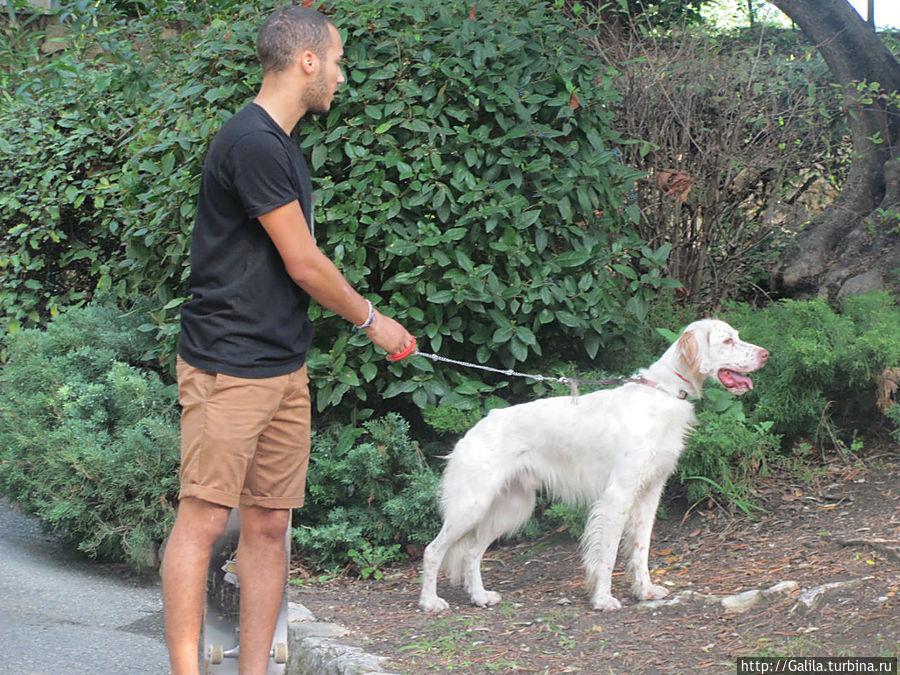 Собака выгуливающая хозяина.