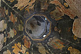 Фрески шатра Покровской церкви, 1570 г.г.
