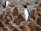 пингвинам что они пингвины  сказал полярник константин  до этого они не знали  но жили так же как сейчас