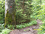 Проходя по тропе  обращаем внимание на метки  на деревьях и камнях.Так обозначается тропа и вы будете уверены,что идете в правильном направлении.