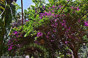 И любуемся цветущими кустами бразильской бугенвиллии, без которой пейзажи летней Сицилии просто немыслимы :)